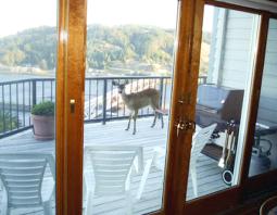 deer-on-deck