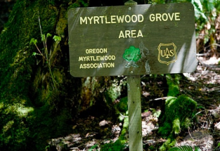 myrtle tree forest